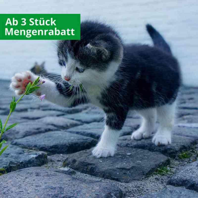CBD Öl für Katzen