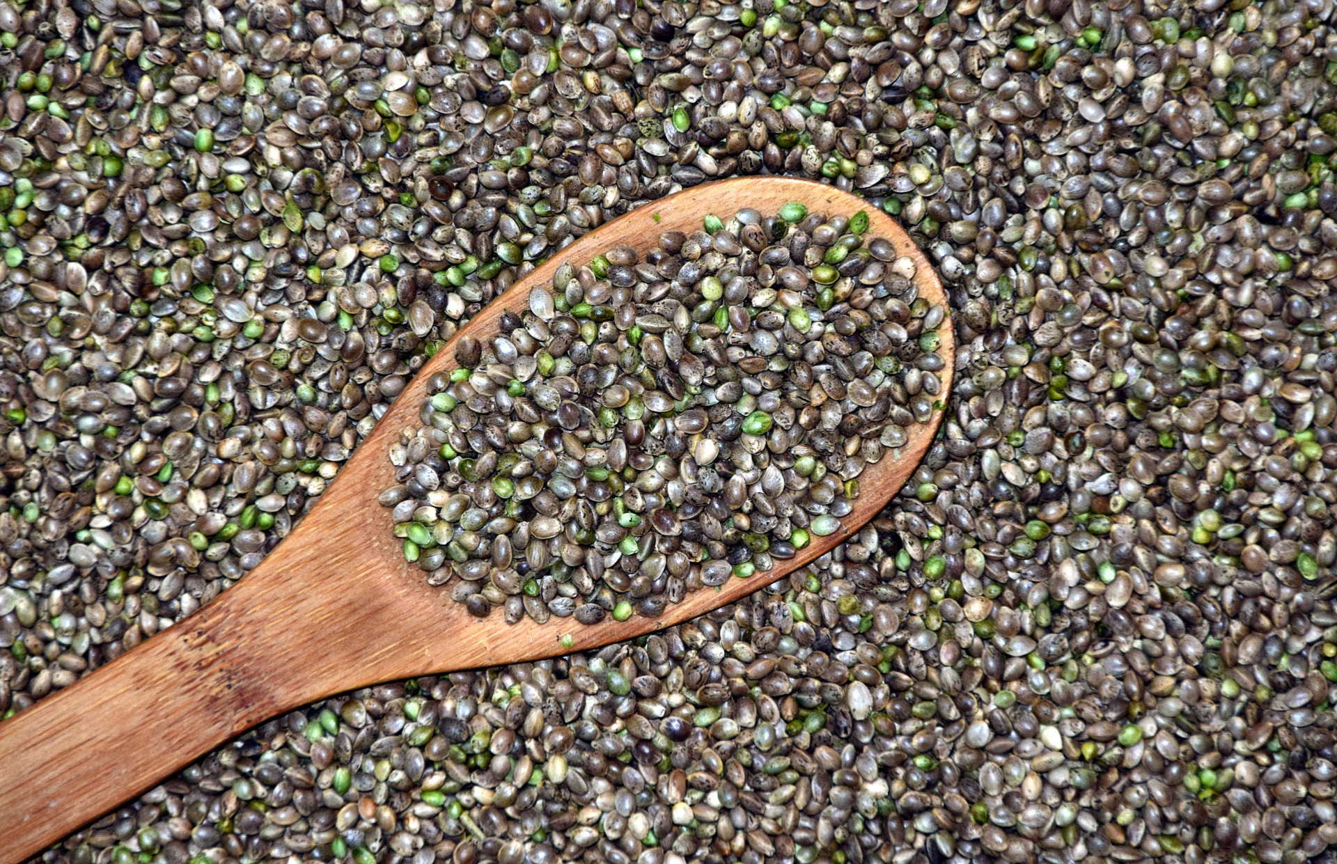 Green an brown seeds for hemp oil production